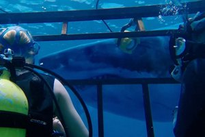 photo for 47 Meters Down
